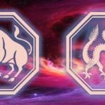 что ждет сочетание знаков тельца и дракона в 2020