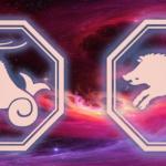 гороскоп для знаков козерога и свиньи на год Крысы