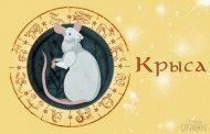 Восточный гороскоп на 2020 год для Крысы
