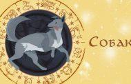 Восточный гороскоп на 2020 год для Собаки