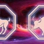 гороскоп для овна-быка на 2020 год