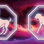 гороскоп овен-собака в 2020 году