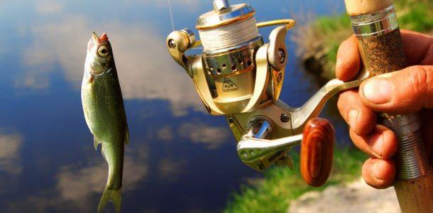 закон о любительском рыболовстве 2020