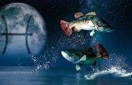 Гороскоп для Рыб мужчин и женщин на 2020 год